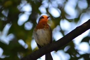 obserwacja ptaków