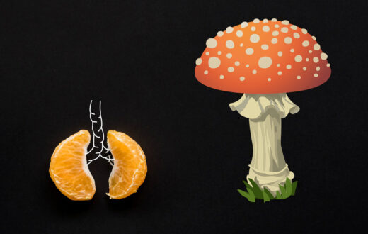 Historia zdrowotna z grzybem w tle
